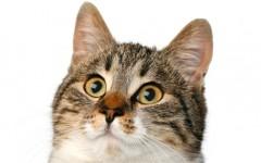 54ea94f58e184_-_01-cat-animal-noises-2