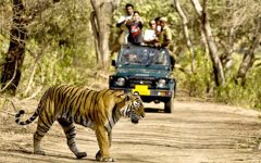 TadobaTigerKingResort-Safari-Rides